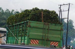 truck-loaded-with-eru